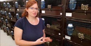 video-un-elevage-pour-sauver-le-grand-hamster-a-jungholtz-1595334757